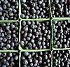 It's Blueberry Season!